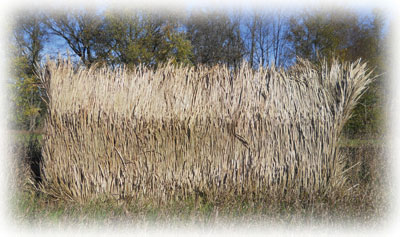 Waterfowl Outfitter Decoy Hunting Upright Blinds