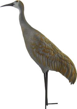 sandhill crane size