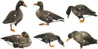 Knutsons Goose Decoys, Canadian Goose, Snow Goose, Blue Goose, White